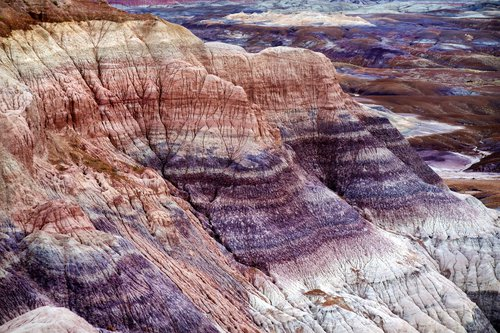 Petrified Forest National Park photo