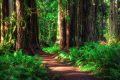 Redwood National and State Parks photo