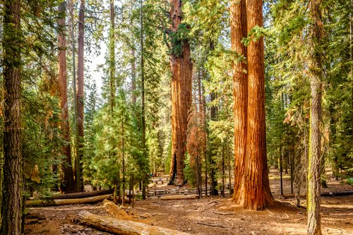 Sequoia National Park photo