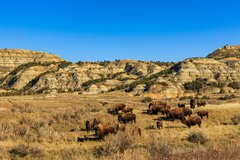 Theodore Roosevelt National Park photo